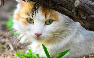Where Do Lost Cats Go?